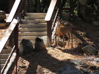 Located inside Yosemite National Park