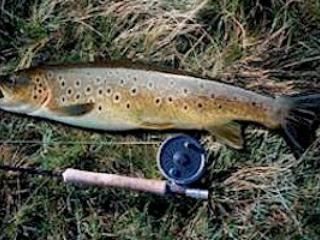 Loch Awe Browny