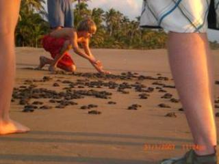 Help save the turtles.