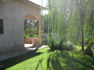 Your own garden under the willow tree.