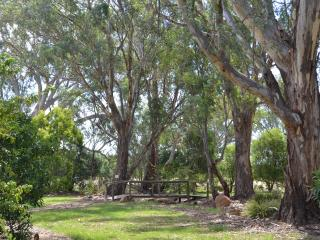 Rural property with abundant bird life surrounds the  large BBQ  and entertaining area.