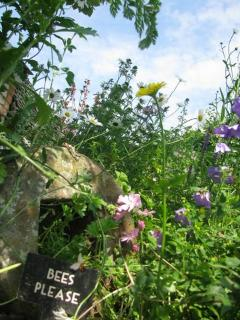 Our wild garden for butterflies and bees