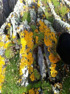 Amazing lichen growing on the rocks