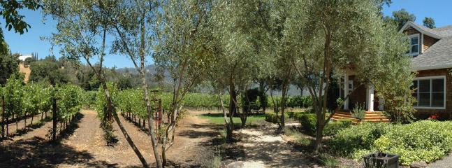 Vineyard and Main house