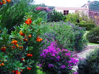 In the private garden there is plenty of mediterranean wonderful plants