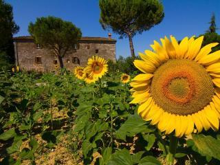 3 bedroom Apartment in Serre di Rapolano, Tuscany, Italy : ref 5504989