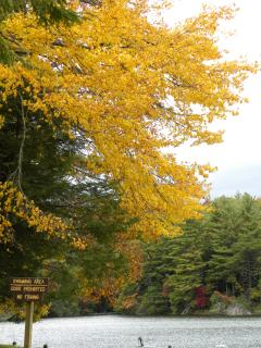 Vogel State Park in the fall