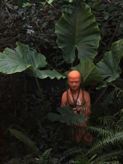 Détail du jardin tropical