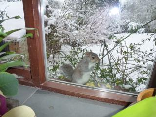 A winter visitor