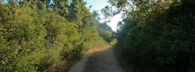 Douliana village is surrounded by short distance tracking routes, ideal for walking.