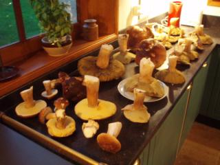 Lucky autumn day ( cepes mushrooms )