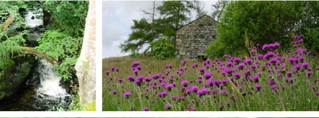 Melancholy thistles and Lucys Barn