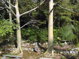 Los Jaguares Glamping: Hut Zapote