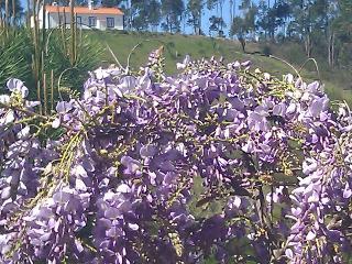 Monte Casarão: Casa Valorosa na sua própria montanha., Odemira