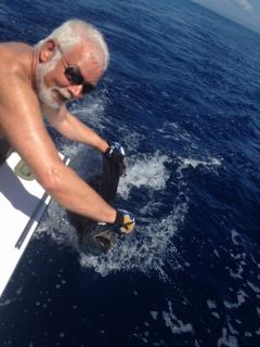 guest with sailfish