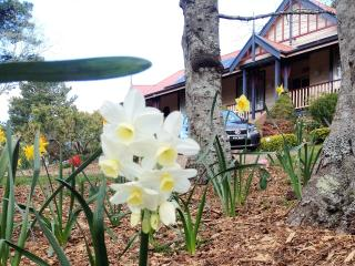Bethany Manor Leura, Blue Mountains. Banks Suite