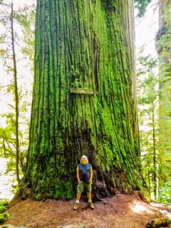 Boy Scout Tree-over 2,000 years old!