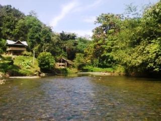 Tranquil Jungle Hut, Bukit Lawang