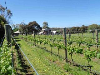 The Vines Boutique Vineyard, Mt Martha