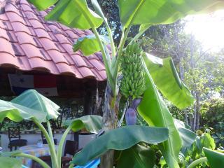 Guest House Mi Refugio La Belle Cité: Ch. El Mango, Playa Coronado