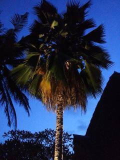 Eine von 14 beleuchteten Palmen