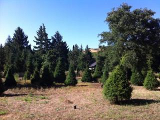 Avl 9/1 Furnished Studio Napa Countryside $1,750