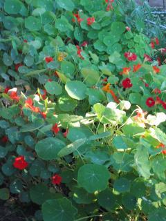 back yard garden in spring