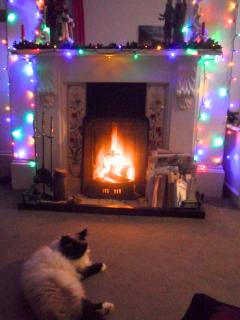 Biscuit enjoying the open fireplace!