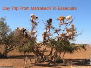 New Year's Eve 2015/2016 In Sahara Desert Morocco, Marrakech