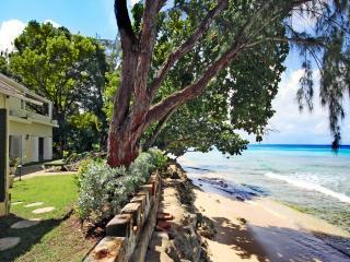 Lush Tropical Gardens, Gibbes