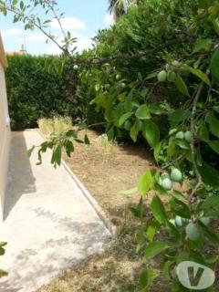 De nombreux arbres fruités (içi un prunier) bénéficient à ceux qui sont présents à ce moment là