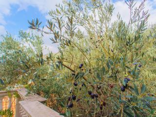 Olive superb apartment 50 m from sea line, Rafailovici