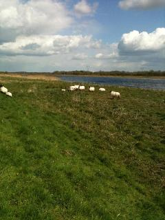 Enjoying the Sunshine by the Shannon River