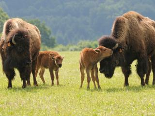 Ranch des Bisons _ Besoin de vous évadez !, Petit-Rederching