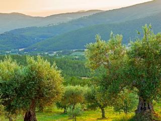 la sommita' - olivi