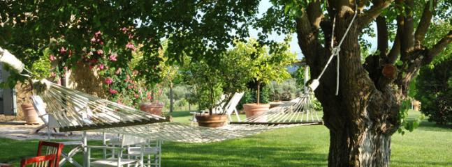 Garden with hammock between ancient trees