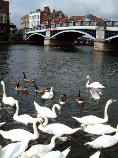 Have fun feeding the swans near the Windsor/Eton bridge!