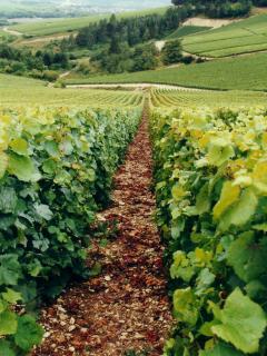 Randonnées dans le vignoble