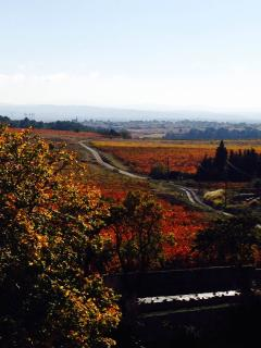 Autumn views of surrounding vineyards and Pyrenees