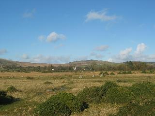 Trallwyn Cottages from the moor + stone circle