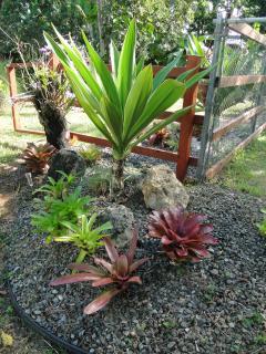 Beautiful  Gardens around the premises.