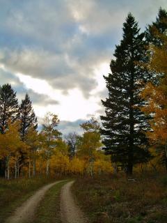 Immaculate 3BR + Loft W. Yellowstone Area Log Home