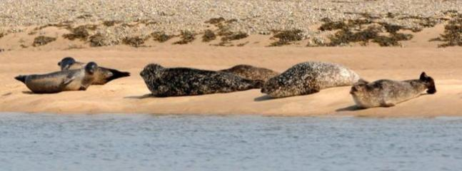 Seals in nearby Embo