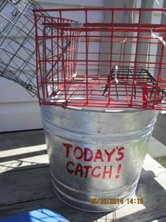 Or go crabbing...