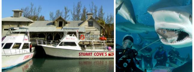 Stuart Cove's.-close by includes snorkeling and scuba diving