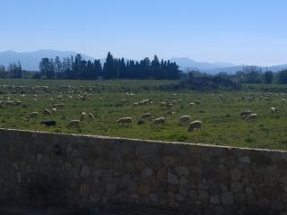 Mas Granata - 700 m du centre de Perpignan
