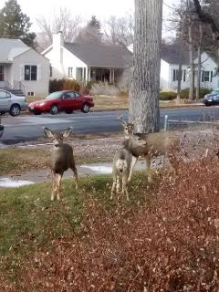 Deer visiting on Christmas Day!