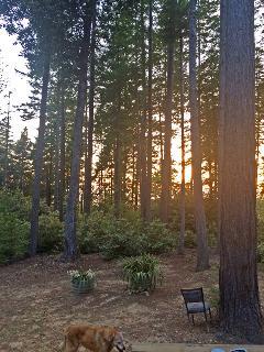Enjoy fantastic sunsets through the Redwoods.