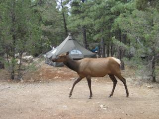 Frequent guests in camp.
