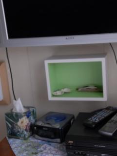TV,  DVD & Cottage Decor in Bedroom